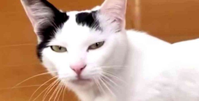 引っ越しで置き去りにされた猫…住民の善意で新たな人生へ No.3