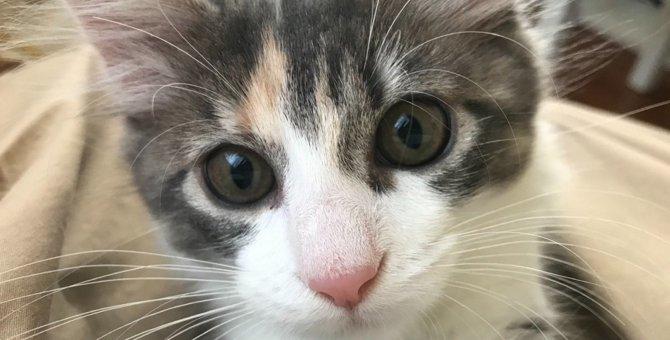 Laylaの12猫占い【2/17~2/23】のあなたと猫ちゃんの運勢