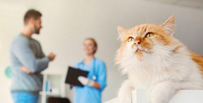 猫に定期検診は絶対必要?どうしても行けないときは?