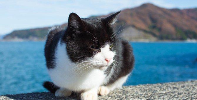 猫デザインのピアスが可愛すぎる!にゃんこ好きにはたまらないアクセサリー