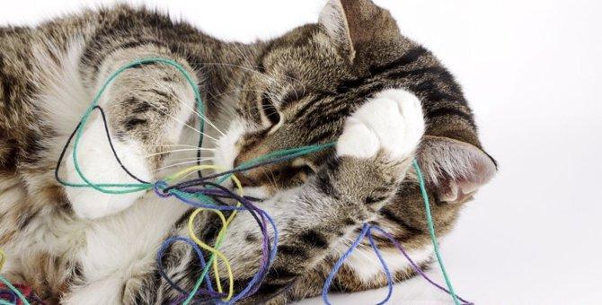猫がセーターを食べてしまう理由や対処法