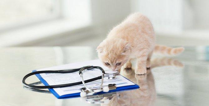 寄生虫が子猫にいる時の5つの症状、駆除の方法