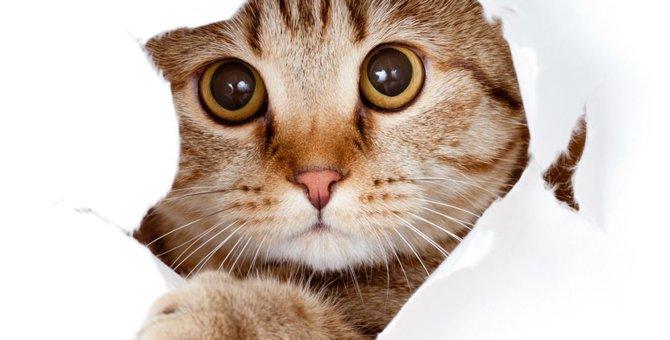 成猫をオススメする理由と迎える際の注意点