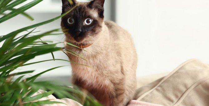 猫のいる家でもOKな『観葉植物』3つ