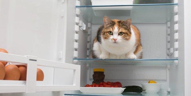 猫がごはんを食べてくれない・・・食欲不振の原因は?