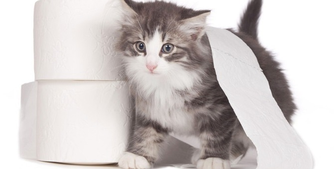 トイレじゃない所で粗相をする愛猫…我が家で試した改善策