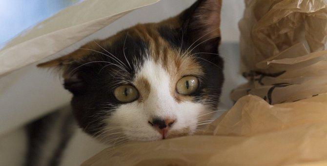 臆病な性格の猫の特徴8つ