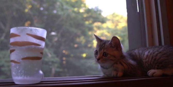 初めての炭酸水に勝負を挑む子猫ちゃん!