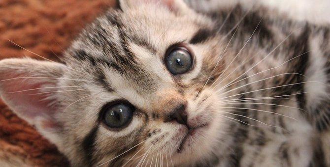 猫が好きすぎる!人がネコ愛する4つの理由