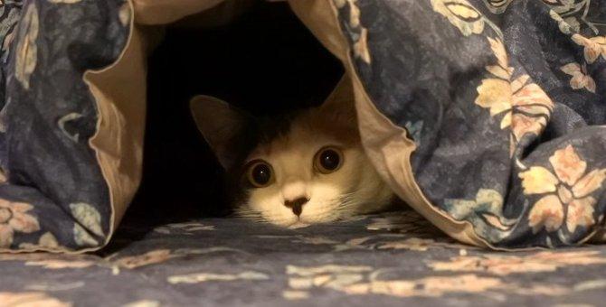 陰からジッ!猫ちゃんのコタツ活用法