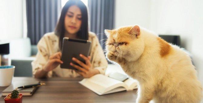 猫が飼い主を『小馬鹿にしている』時の態度と理由4つ