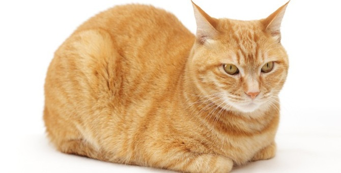 猫の香箱座りに隠されたヒミツ