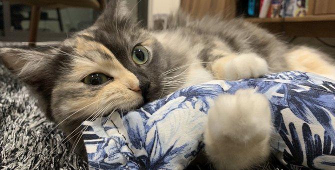 猫が抱きしめたくなるぬいぐるみをDIY♡古着で簡単リメイク