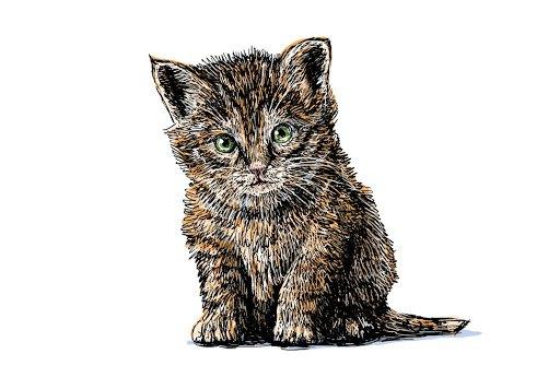猫をデッサンする方法や書く時のコツ、参考にしたい動画まで