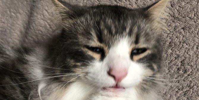 『穏やかでおとなしい猫』の品種5つ