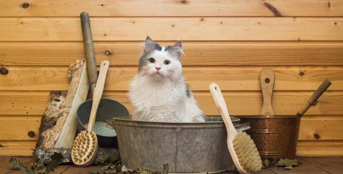 猫用のシャンプーがおすすめな理由