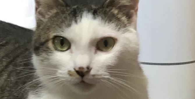 猫に『かまってちゃん』になってもらう4つの方法