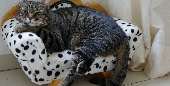 猫は飼い主のことを忘れることがある?忘れてしまう3つの理由とやるべき対策