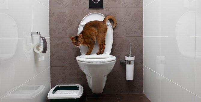 猫がおしっこをしない!考えられる原因や病気と対処法