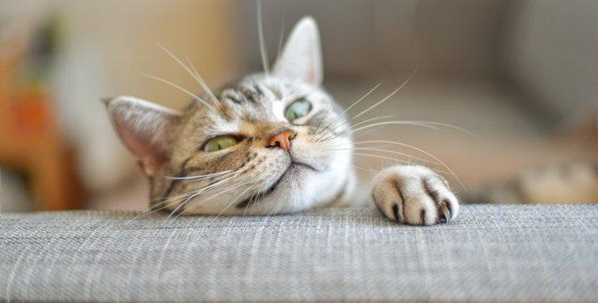 猫を『悩ませる』飼い主のNG行為3つ!何気ない行動が愛猫を苦しめているかも?