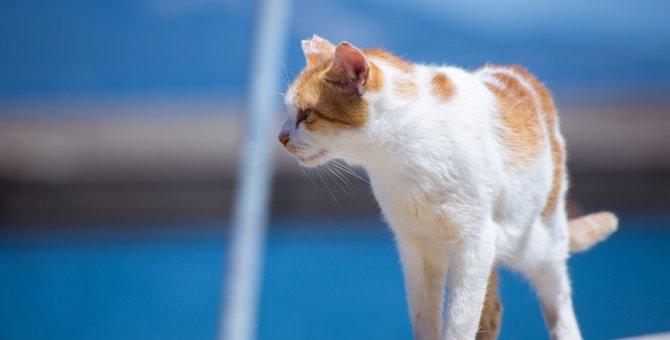 男木島は猫とアートの島!おすすめポイント5つのご紹介