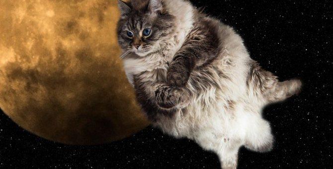 スペースキャットとは~猫と宇宙のコラボレーション~