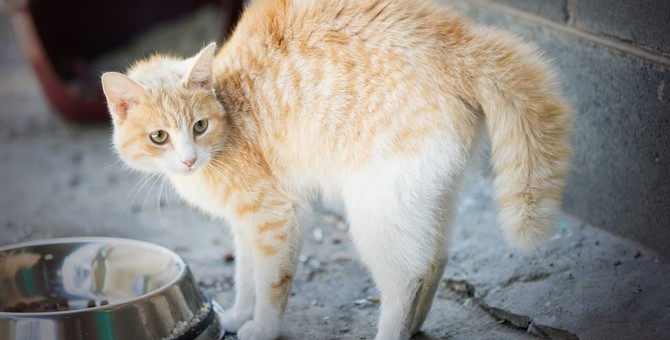 猫の毛が逆立っている時に飼い主がしてはいけないNG行為3つ