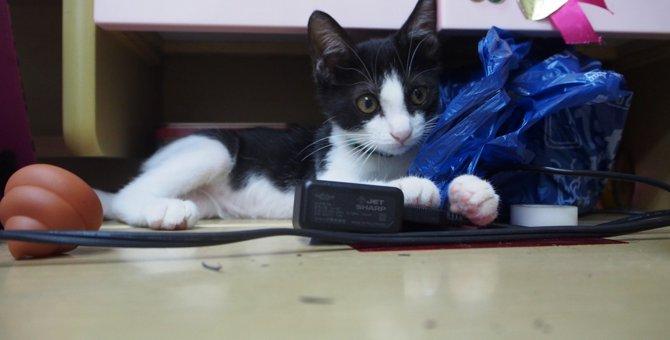 公園で助けを求めていた子猫…駆け寄ってきた「ぷー」を家族に。