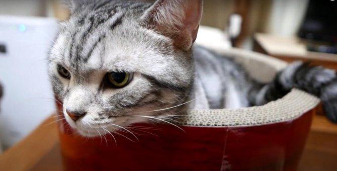 可愛すぎる見守り隊員♡猫ちゃんの静かなるエール