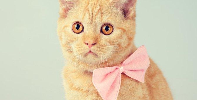 猫に首輪を付けるメリットや注意する事、おすすめの商品まで