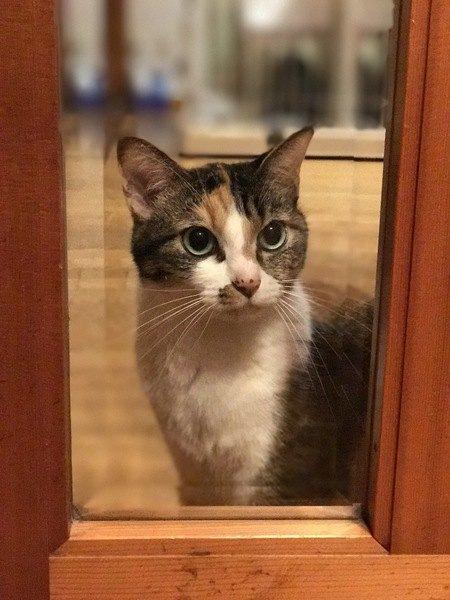 飼い主が見落としがちな猫の『好きだよサイン』5つ