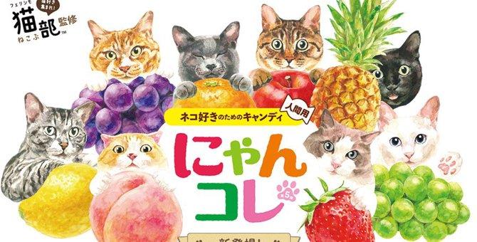 猫好きさんにおすすめ『にゃんコレ』第5弾が登場!