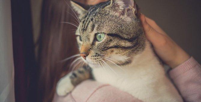 成猫からの飼育ならではの魅力