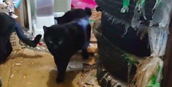悲惨な多頭崩壊現場に突入…ゴミに埋もれた猫たちの運命は?