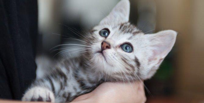 広瀬すずさんが猫を家族に迎え入れた理由