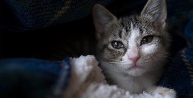 猫が『心の扉』を閉じてしまう3つの原因と対処法