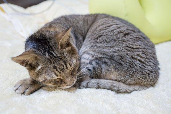 愛猫のシニア期、体調管理に気を付けたい5つの点とは?