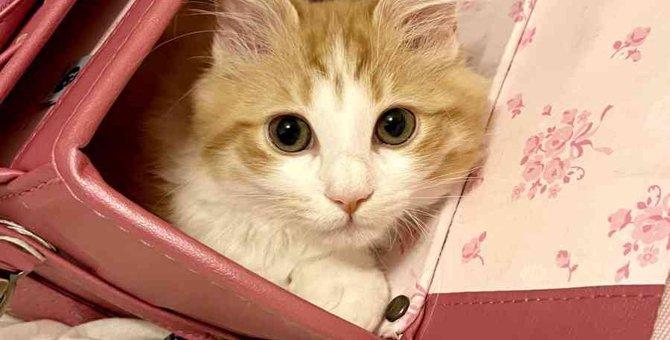 『優しい猫』の特徴3選!仕草や鳴き方に性格が表れているかも?