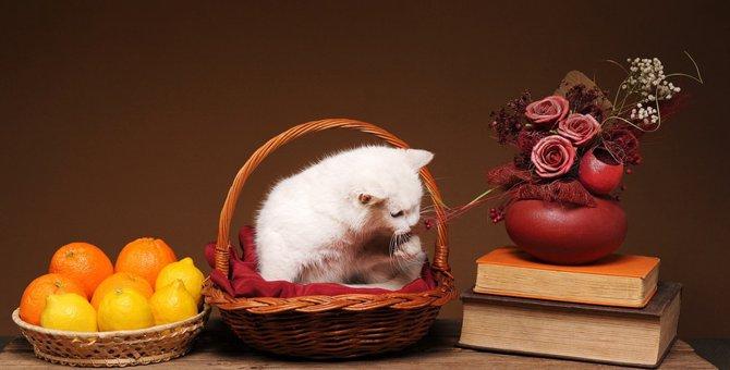 猫にレモンはNG!与えてはいけない理由