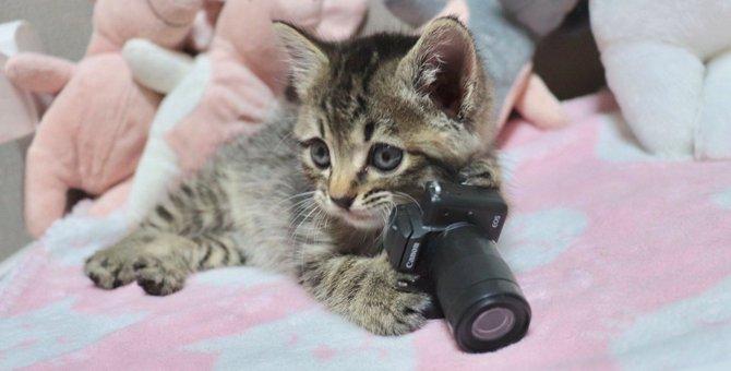 幸せの使者?見る者を笑顔にする話題の天才カメラニャンは保護猫だった