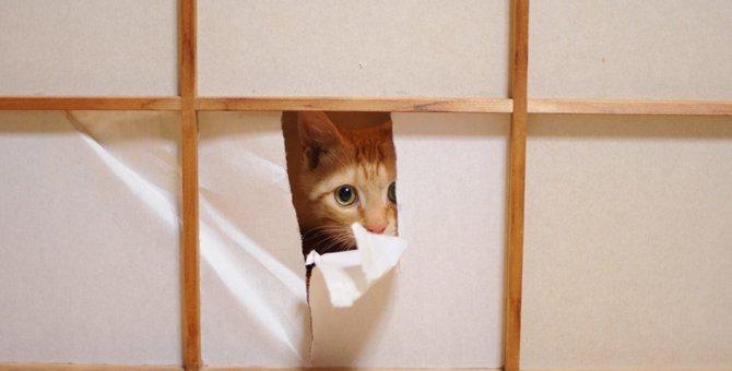 猫が障子をやぶるのはどうして?3つの理由