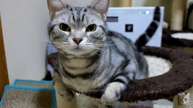 【お水を飲んでブルブルッ!】猫ドリルをハイスピード撮影で捉えた!