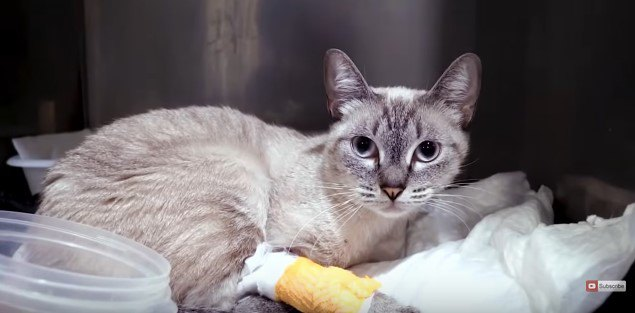 """屋根から投げ落とされた猫…病を克服し""""猫LOVE家庭""""で幸せに!"""