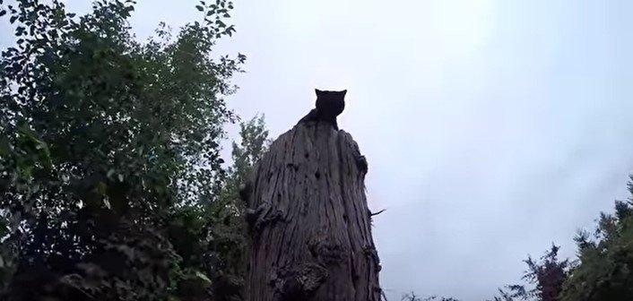 木の頂上から降りられない!声だけで姿の見えない猫をレスキュー