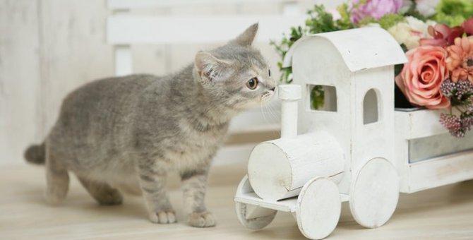 猫の嫌いな4種の匂いで侵入を防ぐ