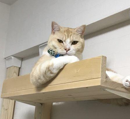 猫との生活で考えるべき『家具の選び方』5つ