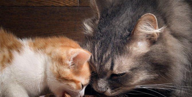 ホリスティックレセピーはどんな猫におすすめ?原材料や特徴や商品