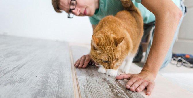 猫の吊り橋で運動不足を解消!おすすめ商品やDIYでの作り方