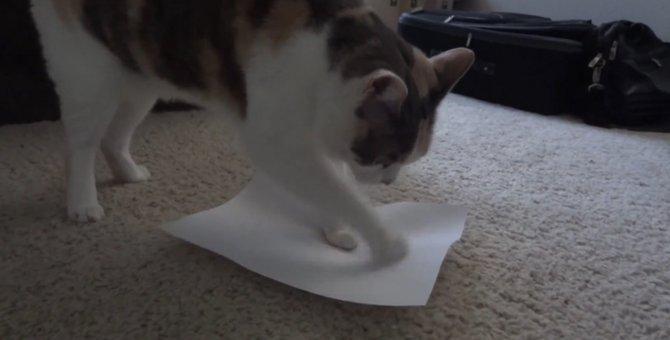 シワ1つも見逃せにゃい!紙のシワ伸ばしに余念がない猫