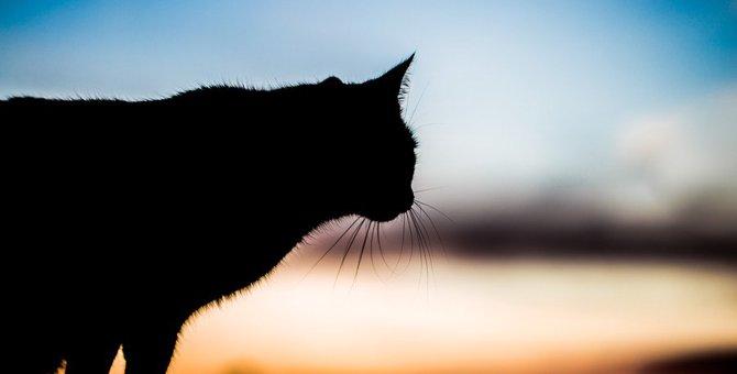 大切な猫が死去したら…『葬儀社・火葬業者』選びで気をつけたい5つのこと